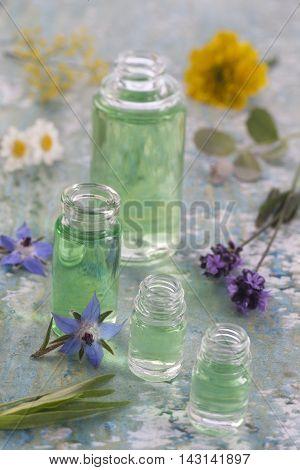 aromatherapy, aromatherapy, borage chamomile tarragon eucalyptus fennel bottles poster