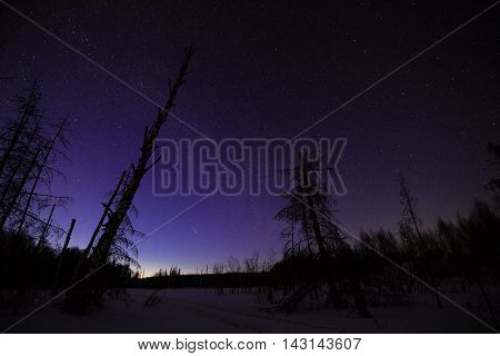 Starry Winter Landscape