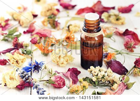 Bottle of herbal infused essential oil, amidst different colorful dried medicinal herbs and flowers.