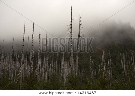 Dead Wald