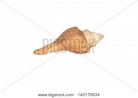 Closeup object, Sea shell isolated on white background