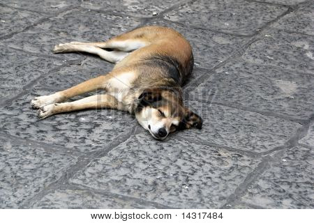 Old homeless dog sleeping on the sidewalk poster