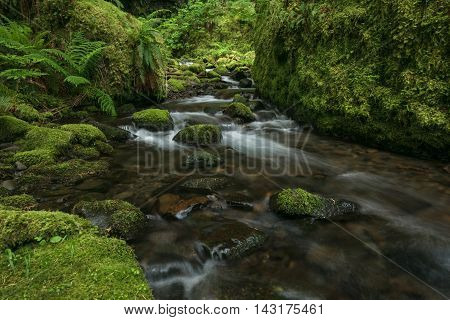 A stream wanders through a lush temperate rain forest