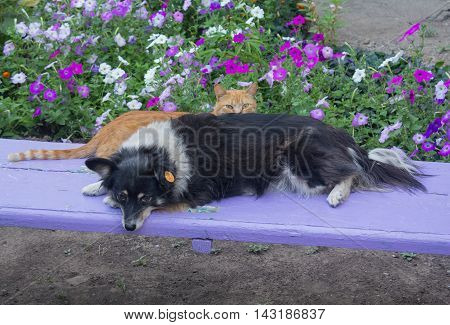 Homeless companions dogs and cats are sitting on the bench