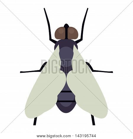 House fly insect and cartoon black fly insect. Insect hairy legs biology housefly. Bluebottle fly insect species calliphora vomitoria bug animal nature macro pest with big eyes hairy legs flat vector.