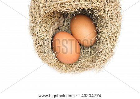 Skylark Nests and egg Close up Baya weaver bird  on white background.