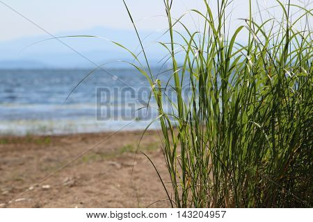 Beach grasses on the beach on Lake Champlain, New York
