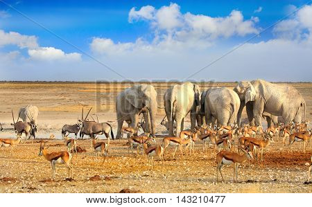 A herd of elephants with Springbok & Gemsbok Oryx around a waterhole in Etosha National Park with a vivid blue cloudy sky background