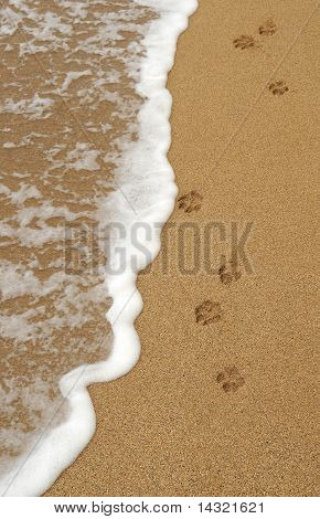 Dog Paw Footprints In The Sand