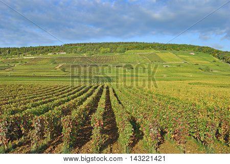 Vineyard Landscape in Burgundy near Wine Village of Chablis,France