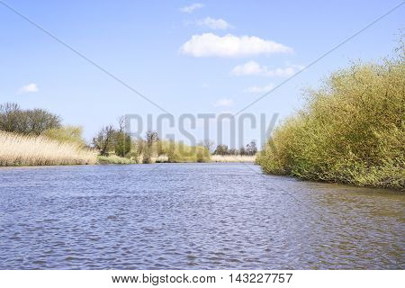 Riverside scene in springtime with reeds and blue sky.
