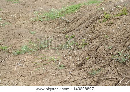 close up dry cracked soil in nature garden