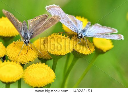 Beautiful butterfly sitting on a flower with spread wings