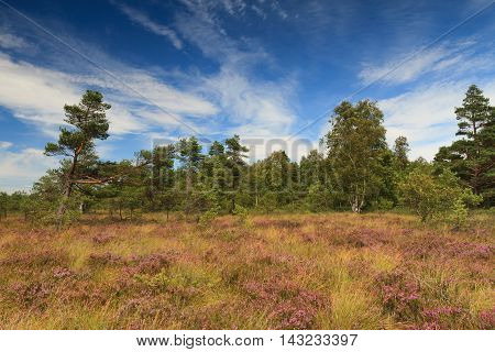Marsh landscape at the low mountain range Rhoen Schwarzes Moor Hessen Germany