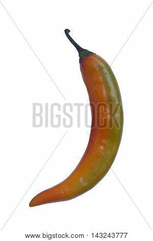 Korean hot pepper (Capsicum annuum Korean hot pepper). Image of single pepper isolated on white background