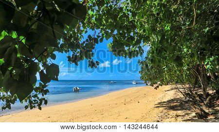 Tropical beach view through trees onto sand and water