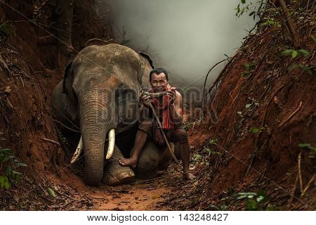 Lifestyfe an elephant and mahout at wood.