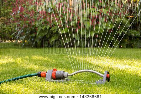 Close up of a lawn sprinkler watering a lawn