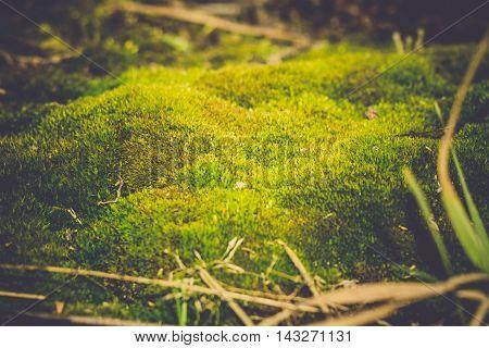 Green Moss Macro Filtered