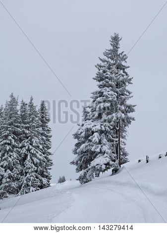 Wintery wonderland. Snow covered trees in the Alps.