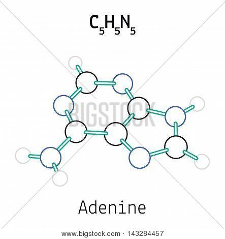 C5H5N5 adenine 3d molecule isolated on white