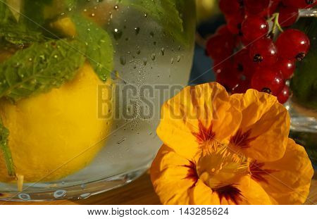 A refreshingly looking carafe covered with condensate and filled with water, mint and lemon. Next to it is a yellow nasturtium blossom and redcurrants in the background.