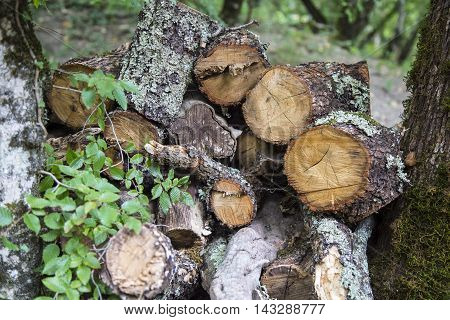Firewood stacked in the outdoor woodpile logs