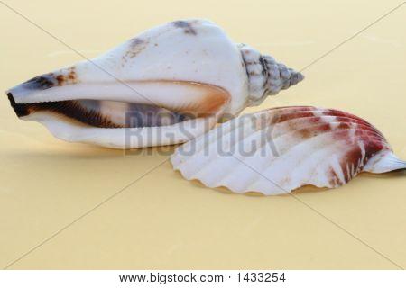 The Sea Shells