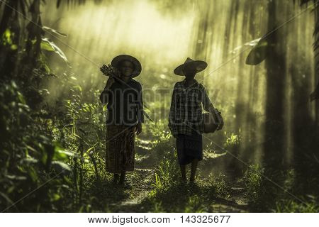 Asian old woman working in the rainforest