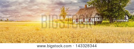 Typical Danish Picturesque old houses and wheatfield at Sunrise / Sunset in Kvaerndrup, Denmark
