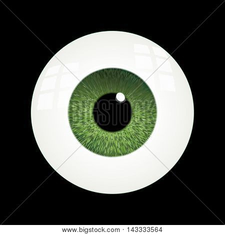 Vector Rendering of a Human Eyeball With Green Iris.