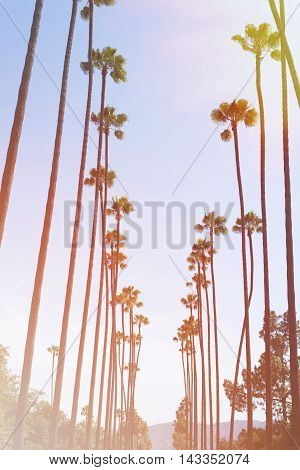 Row of palm trees with vintage instagram effect