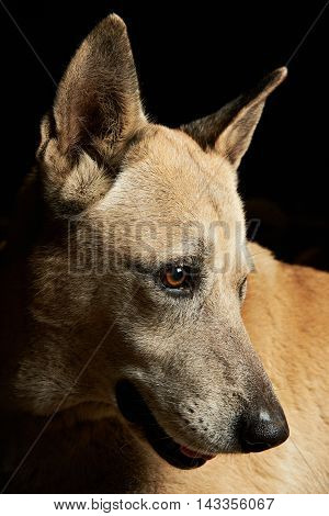 Close Up Portrait Of Shepherd