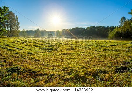 Morning Foggy Meadow Landscape In Polish Countryside