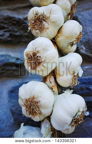 Plait of white garlic heads hanging on the stone wall in Italy La Spezia