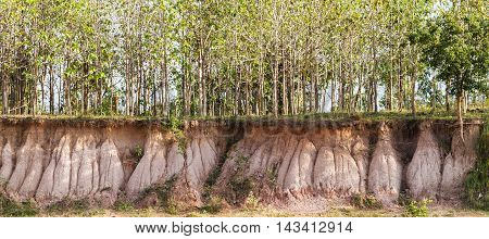 Cross section of tree and underground soil layers beneath