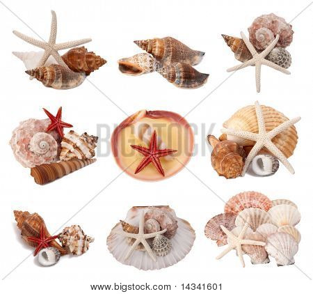 Seashells  collection isolated on white background