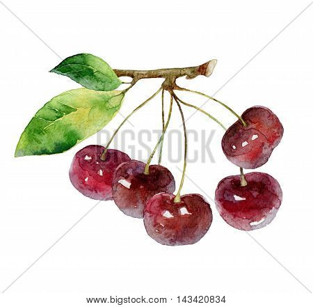 Cherry berries with green leaves isolated on white background. Watercolor illustration