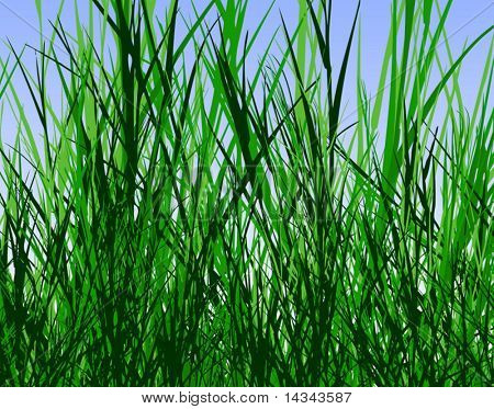 Editable vector design of tall rough grass