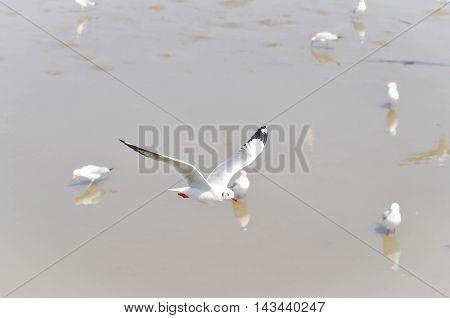 flying seagull near the ocean , seagull