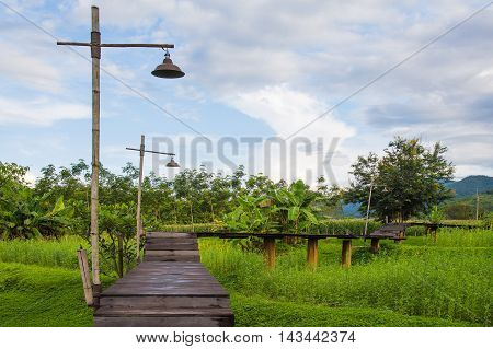 Wooden bridge over rice field, natural landscape background