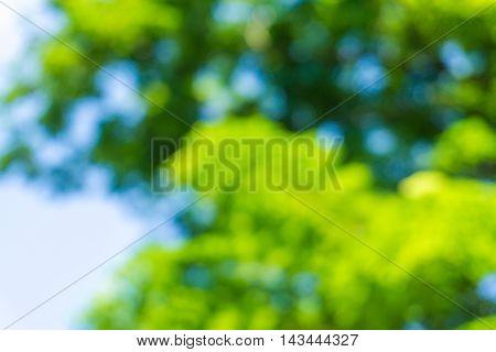Natural Green Blurred Bokeh Leaf Background.