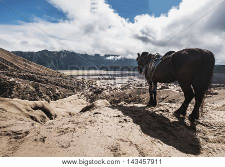The horse enjoying beautiful view at Mount Bromo, Indonesia