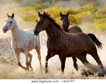 three horses two dark and one white running throgh the desert freely poster
