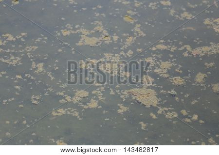 Abstract waste water in canal because waste discharge from industrial plants.