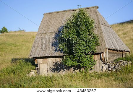 cabin and tree roof in Podgora, place on Durmitor mountain