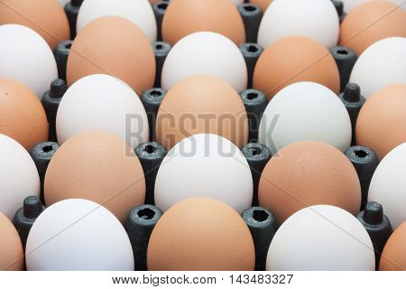 Chicken eggs and duck eggs in panel