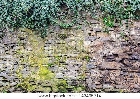 massive wall of cut stone on which the green ivy grows