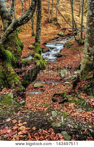 Mountain stream with cascade flows among the stones through autumn forest with some moss on the trees and orange foliage on the ground