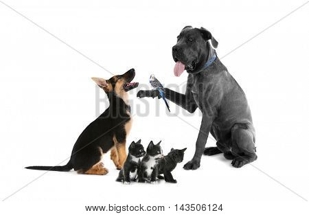 Group of pets on white background. Animals friendship.